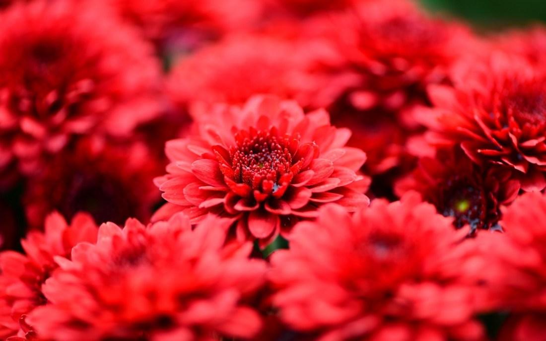 fleurs blog